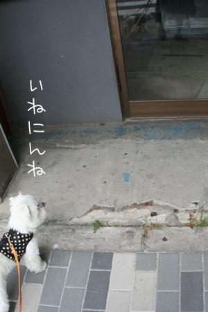 8_21_3113.jpg
