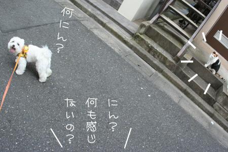8_22_3239.jpg