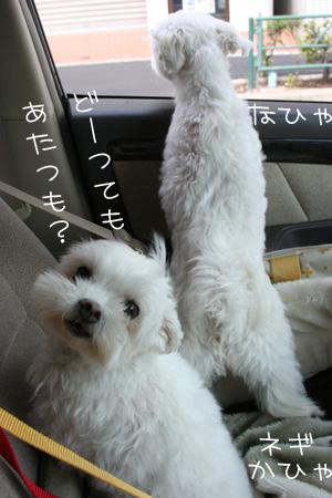 8_23_3284.jpg