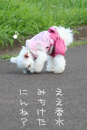8_25_4375.jpg