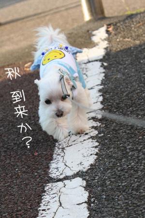 8_26_4760.jpg