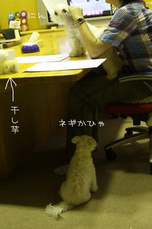 8_6_2691.jpg