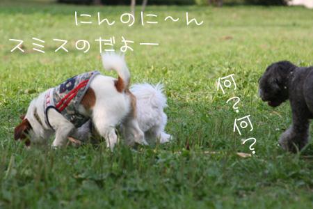 9_10_7732.jpg