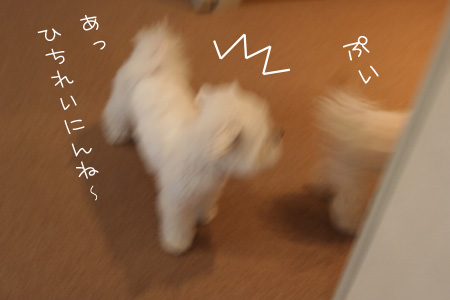9_12_8165.jpg