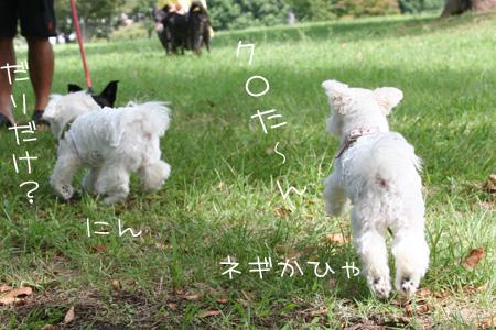 9_13_8180.jpg