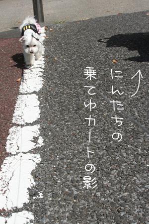 9_6_6656.jpg