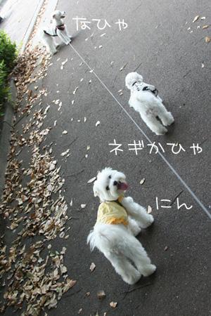 9_7_6978.jpg