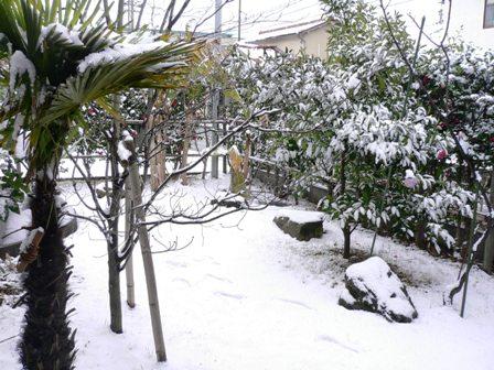 今年の積雪