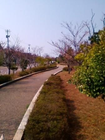 ハマナス遊歩道