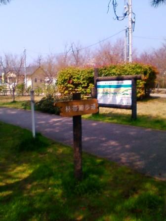 林帯遊歩道1
