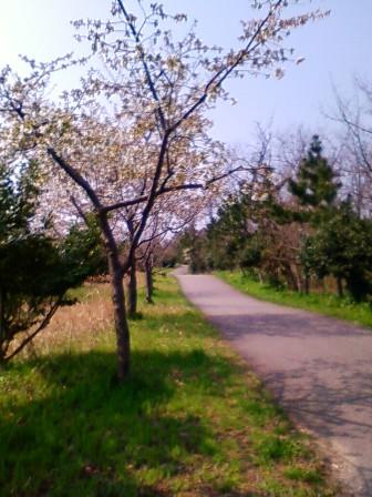 林帯遊歩道2