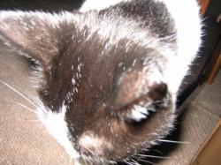 cat061012.jpg