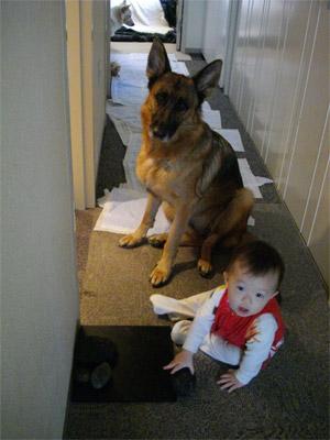 dog23.jpg