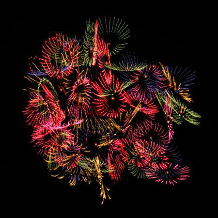 fireflower1.jpg