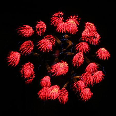 fireflower9.jpg