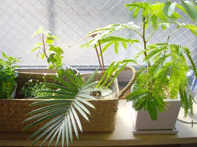 green_20090202232906.jpg
