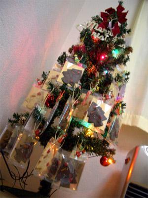 tree1_20081226225030.jpg