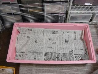 新聞2枚敷きます
