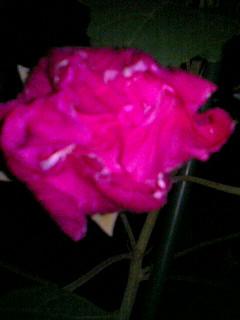 PA0_0045_20090914175047.jpg