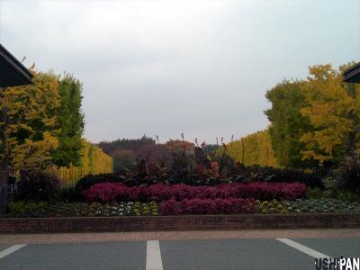 昭和記念公園紅葉01