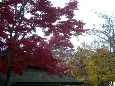 昭和記念公園紅葉10