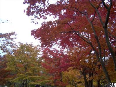 昭和記念公園紅葉12