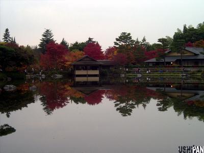 昭和記念公園紅葉14