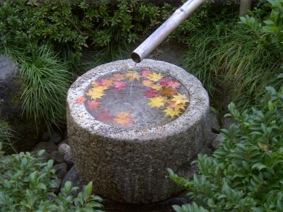 昭和記念公園紅葉16