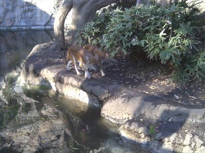 上野動物園ドール2