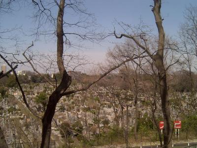 霊園の桜4