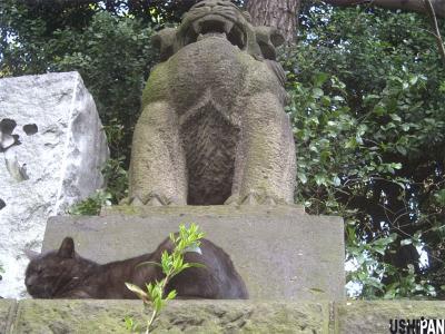 代々木八幡宮の狛猫2