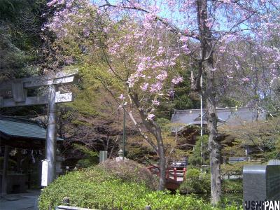貫井神社1