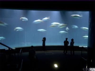 葛西臨海水族園5