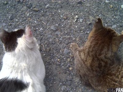 両手に猫1