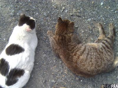 両手に猫2