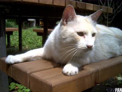 善福寺公園の野良猫さん1