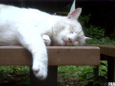 善福寺公園の野良猫さん2