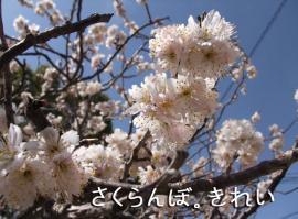 BLOG2009_0305_114722.jpg