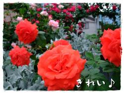 BLOG2009_0512_180043.jpg