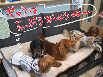 blog 09043003