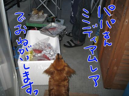 blog 09051102