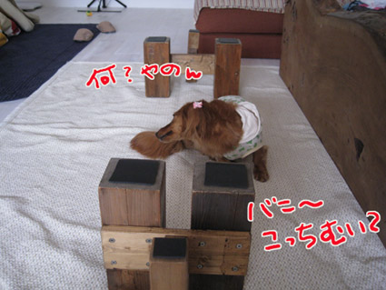 blog 09051901