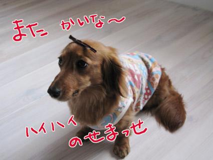 blog 09052504