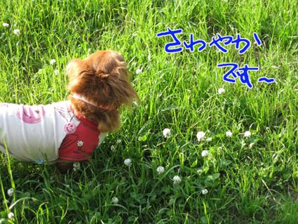 blog 09052704