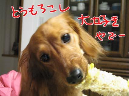 blog 09061201