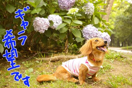 blog 09061503