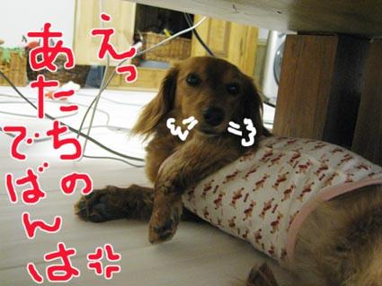 blog 09061910
