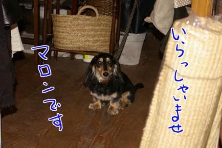 blog 09062603