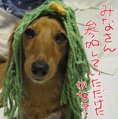 blog 09070203