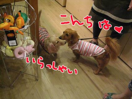 blog 09070901